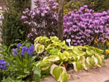 Canada Blooms Garden